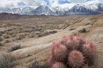 USA, California, Lone Pine by Danita Delimont
