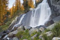 USA, California, Inyo National Forest von Danita Delimont