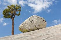 USA, California, Yosemite National Park von Danita Delimont