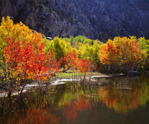 Autumn in the Sierras von Danita Delimont