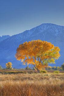 USA, California, Sierra Nevada Range von Danita Delimont