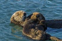 USA, California, Morro Bay von Danita Delimont