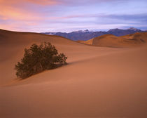 USA, California, Death Valley National Park, Mesquite Sand Dunes by Danita Delimont