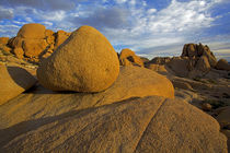 USA, California, Joshua Tree National Park, granite formatio... by Danita Delimont