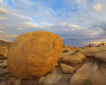 USA, California, Joshua Tree National Park, Granite rock nea... von Danita Delimont