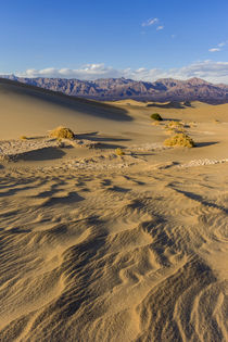 The Mesquite sand dunes in Death Valley National Park, California, USA by Danita Delimont