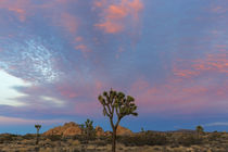 Joshua Tree National Park by Danita Delimont