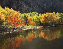 USA, California, Sierra Nevada Mountains, Autumn colors of a... von Danita Delimont