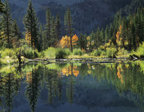 USA, California, Sierra Nevada Mountains, Autumn colors of a... von Danita Delimont