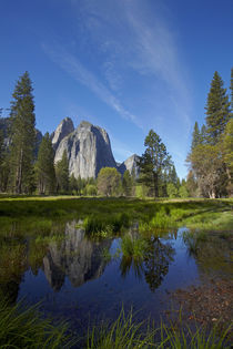 Cathedral Rocks reflected in a pond in Yosemite Valley, Yose... by Danita Delimont
