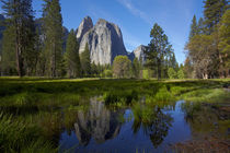 Cathedral Rocks reflected in a pond in Yosemite Valley, Yose... von Danita Delimont