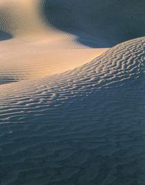 sand dune von Danita Delimont