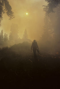 USA, California, Forest Fire, Sequoia and Kings Canyon National Park by Danita Delimont