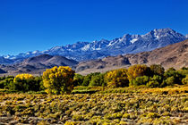 Driving on Hwy 395 Outside of Bishop, California, USA. von Danita Delimont