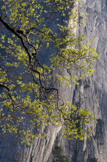 USA, California, Yosemite National Park von Danita Delimont