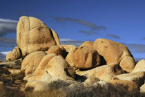 Arch Rock Trail, Joshua Tree National Park, California, USA. von Danita Delimont