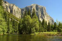 Yosemite from Valley Floor, Sierra-Nevada, Merced River, fro... by Danita Delimont