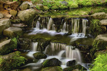 Fern Spring, Yosemite National Park, California, USA by Danita Delimont