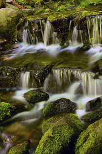 Fern Spring, Yosemite National Park, California, USA von Danita Delimont