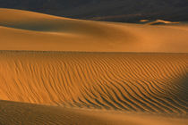 Sand ripples of the Mesquite Flat Dunes, Death Valley Nation... by Danita Delimont