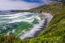 Wildflowers above Sand Dollar Beach, Los Padres National For... by Danita Delimont