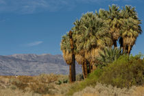 Coachella Valley Preserve von Danita Delimont