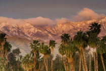 USA, California, Palm Springs by Danita Delimont