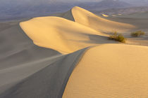 Mesquite Flat Sand Dunes at dawn, Death Valley, California von Danita Delimont