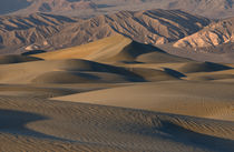 Undulating sand dunes of Death Valley in golden light von Danita Delimont