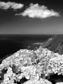 Hydrangeas by Gaspar Avila