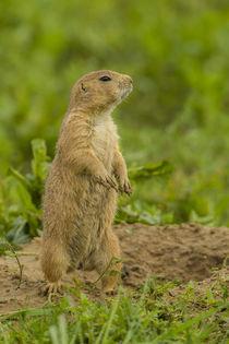 USA, Colorado, Rocky Mountain Arsenal National Wildlife Refuge by Danita Delimont