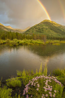 USA, Colorado, Gunnison National Forest von Danita Delimont