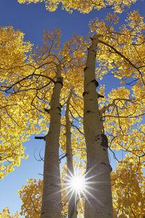 USA, Colorado, San Juan Mountains von Danita Delimont