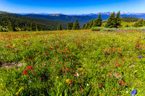 USA, Colorado, Shrine Pass, Vail by Danita Delimont