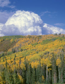 USA, Colorado, Grand Mesa National Forest, Approaching storm... by Danita Delimont