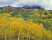 USA, Colorado, Gunnison National Forest, Fall brings color t... von Danita Delimont