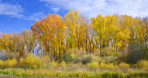 USA, Colorado, Curecanti National Recreation Area, Narrowlea... by Danita Delimont