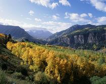 USA, Colorado, View of San Juan Mountains Range with aspen t... by Danita Delimont