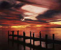 USA, Florida, Fort Meyers, Silhouetted birds on pier at sunset von Danita Delimont