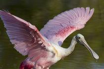 USA, Florida, Everglades National Park von Danita Delimont