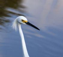 USA, Florida, Everglades National Park by Danita Delimont