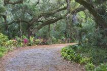 USA, Florida by Danita Delimont