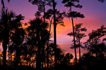 Big Cypress sunset. by Danita Delimont