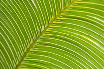 Palm frond diagonal by Danita Delimont