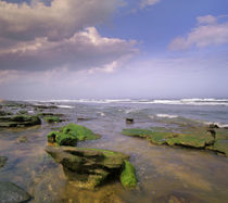 The Rocks Beach at Washington Oaks Gardens, Florida, USA von Danita Delimont