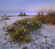 Bowman's Beach, Sanibel Island, Florida, USA by Danita Delimont