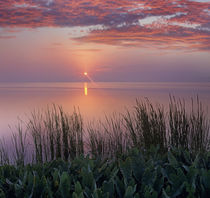 Sunrise over Indian River Marsh near Titusville, Florida, USA by Danita Delimont