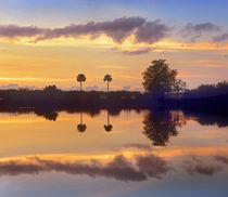 Silhouetted scenic, Everglades National Park, Florida, USA by Danita Delimont