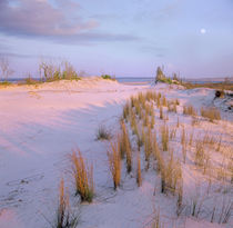 Moon over Little Talbot Island State Park, Florida, USA by Danita Delimont
