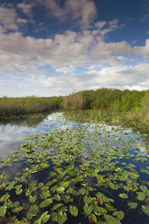 USA, Florida, Everglades National Park, swamp view from The ... von Danita Delimont